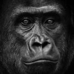 гранулятор горилла graf